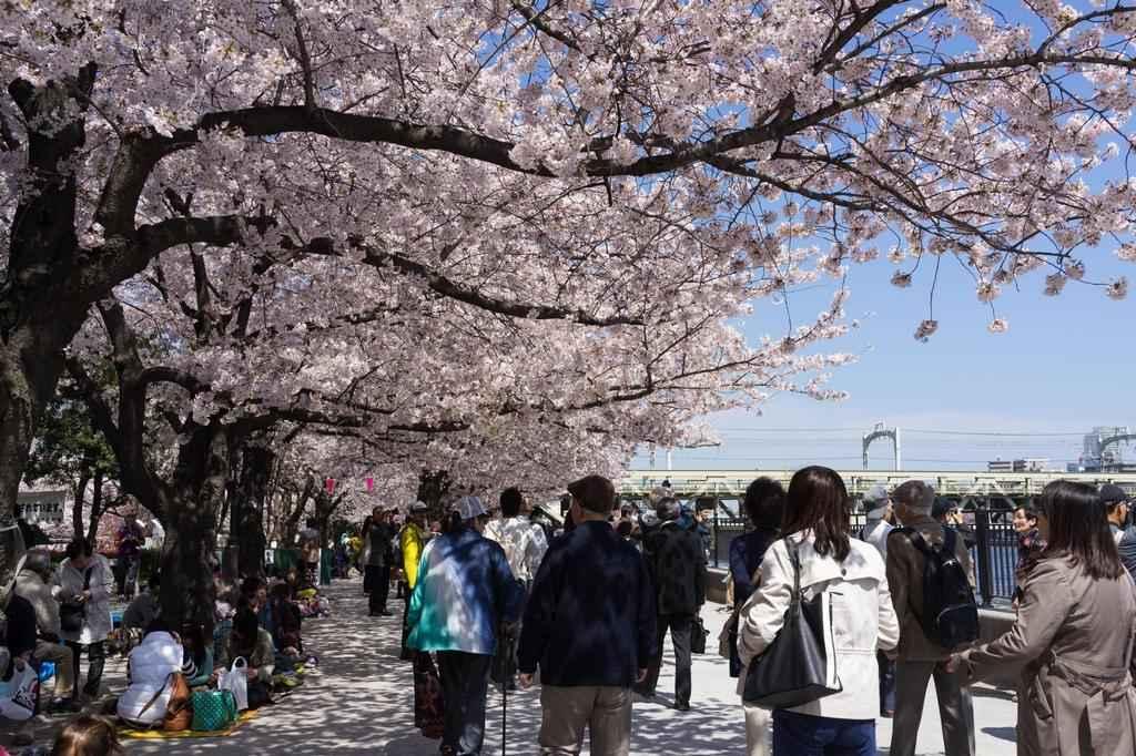 7 công viên ngắm hoa anh đào đẹp nhất Nhật Bản tugo.com.vn