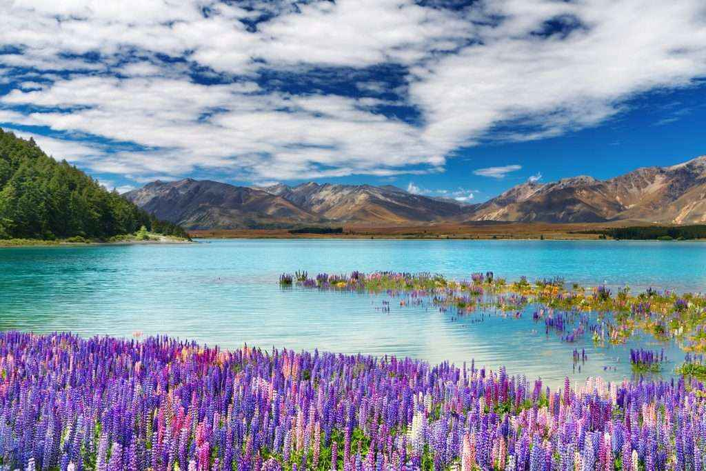 TOUR CHRISTCHURCH – TEKAPO - MT COOK - QUEENSTOWN 6N5D (GT)