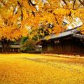 Tháng 11 là thời điểm lý tưởng cho các chuyến du lịch tại Hàn Quốc