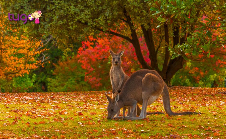 Tháng 3 là thời điểm bắt đầu vào thu ở Úc