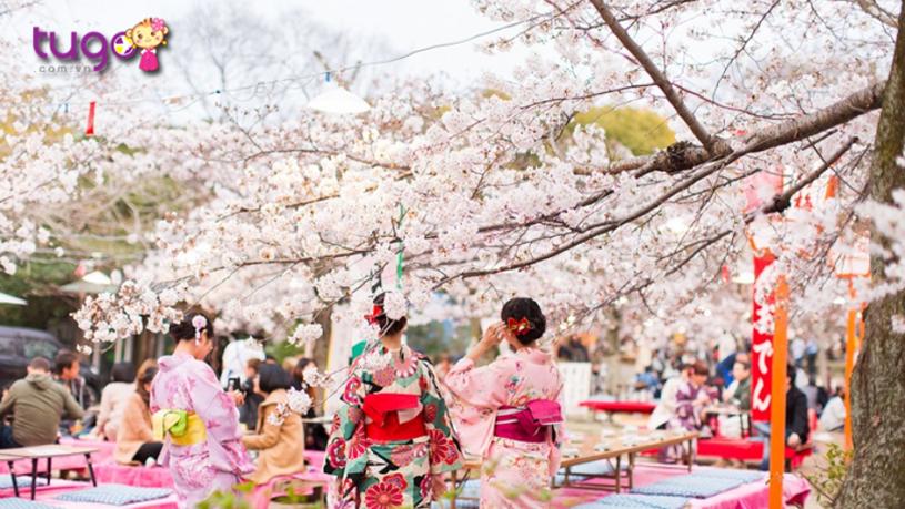 Tháng 3 là thời điểm lý tưởng nhất để thưởng hoa mùa xuân ở Nhật Bản