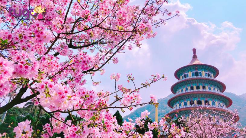 Tháng 3 là thời điểm tuyệt vời để chiêm ngưỡng cảnh sắc quyến rũ ở Đài Loan