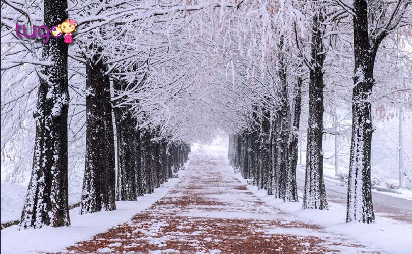 Thời tiết mùa đông ở Hàn Quốc có thích hợp cho các chuyến du lịch?