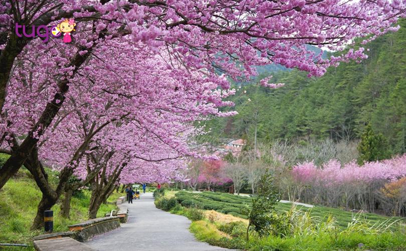 Thời tiết mùa xuân ở Đài Loan vô cùng thích hợp cho các chuyến du lịch