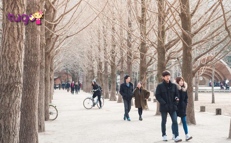 Thời tiết tháng 2 ở Hàn Quốc có phần ấm áp và thoải mái hơn cho các hoạt động du lịch