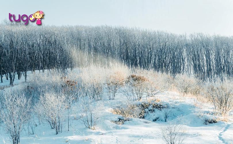 Tuyết rơi trắng xóa, bao phủ khắp mọi nơi ở Hokkaido vào mùa đông