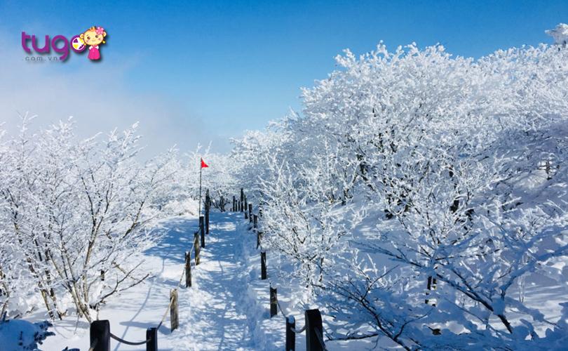 Tuyết trắng phủ đầy mọi ngõ ngách khi đông về ở đảo Jeju