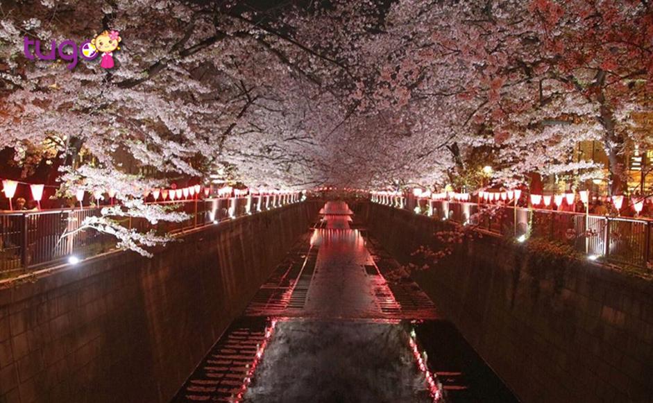 Vẻ đẹp lung linh, huyền ảo ở Meguro, Tokyo về đêm