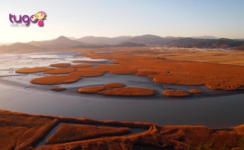 Vịnh Suncheon - hành trình thú vị dành cho bạn khi du lịch Hàn Quốc mùa thu