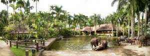 Tour Bali 3N2D - Công viên voi
