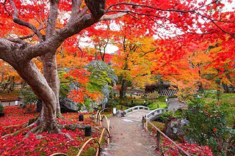 tour hàn quốc mùa thu