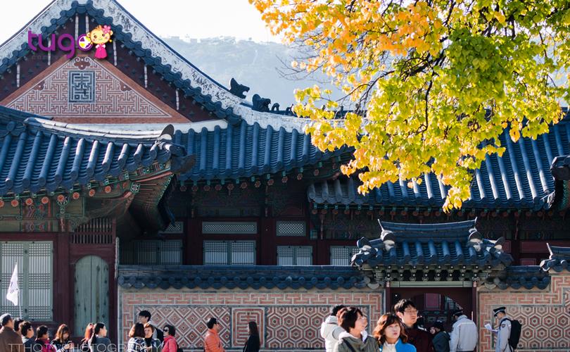 cung-dien-gyeongbok-thu-hut-dong-dao-du-khach-nho-ve-dep-co-kin-lau-doi