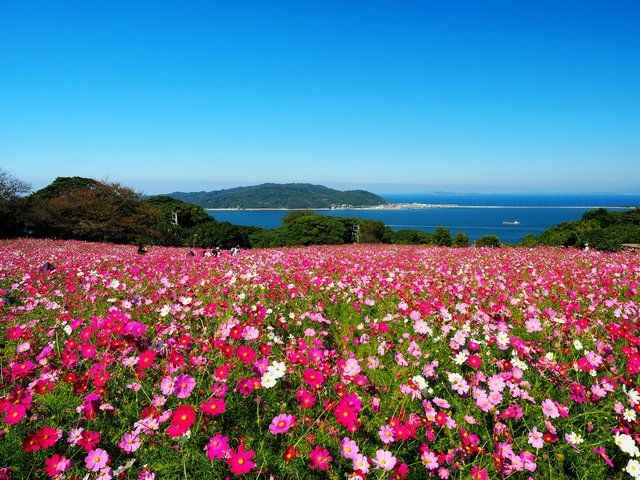 TOUR NHẬT BẢN : FUKUOKA – KUMAMOTO- FUKUOKA- BAY VNA - 3N3D