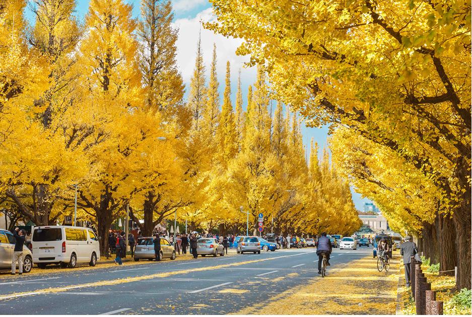 TOUR NHẬT NIKKO MÙA THU 2019 : TOKYO – NARITA – NIKKO- FUJI MOUNT – HAKONE 4N4Đ