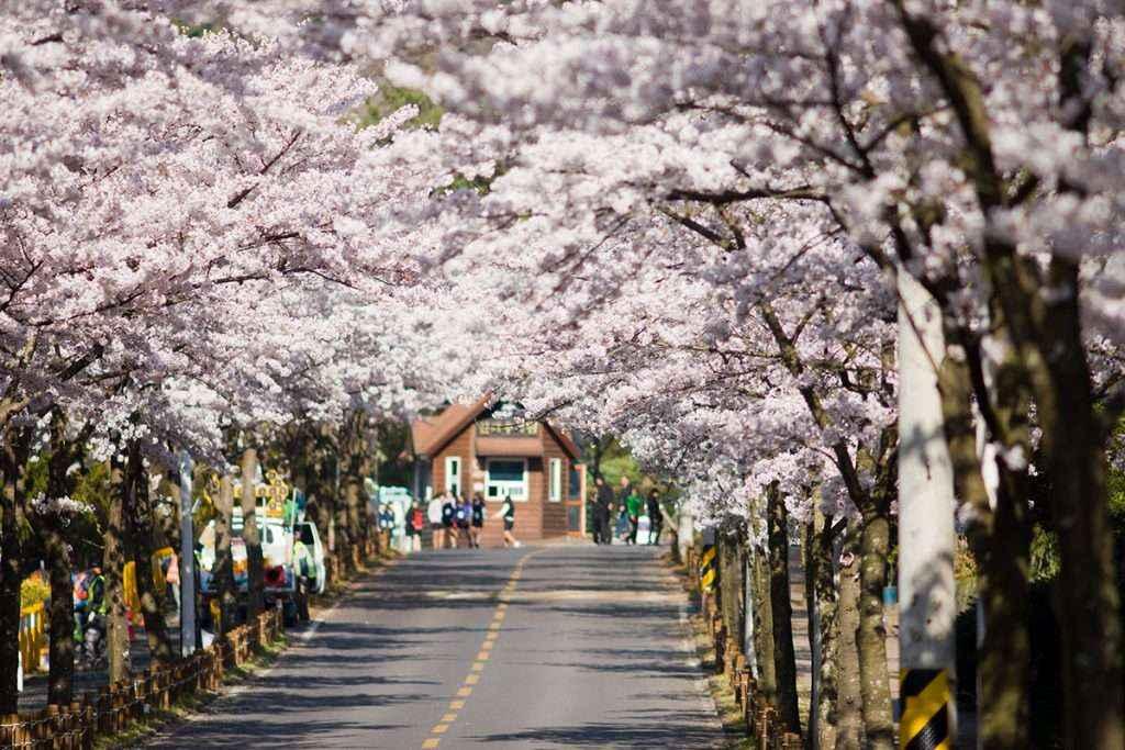 TOUR HÀN QUỐC 5N5D: BUSAN - SEOUL - NAMI – EVERLAND (TG-CA) 2018