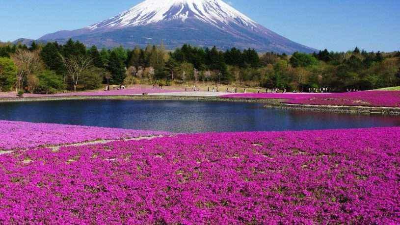 đi du lịch Nhật Bản