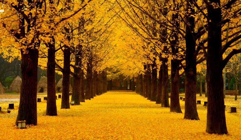 Khunh cảnh đẹp lunh linh của hàng cây tại Nami