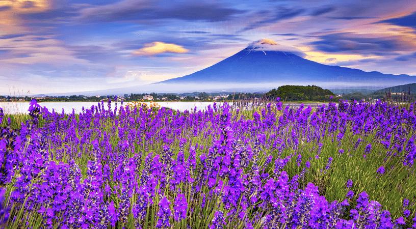 TOUR NHẬT BẢN 4N3Đ : NARITA – TOKYO – HAKONE – FUJISAN