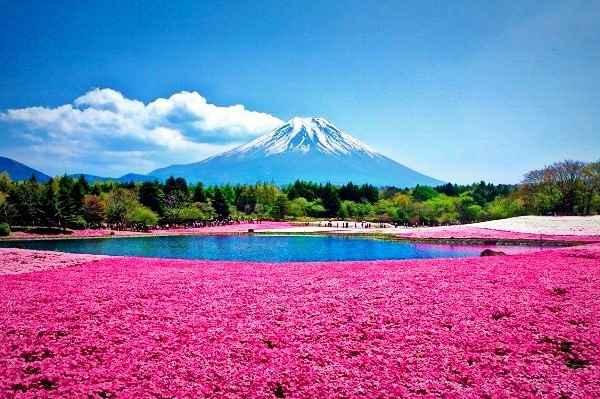 TOUR NHẬT BẢN 5N5D OSAKA-KYOTO–NAGOYA-FUJI MOUNT-NARITA