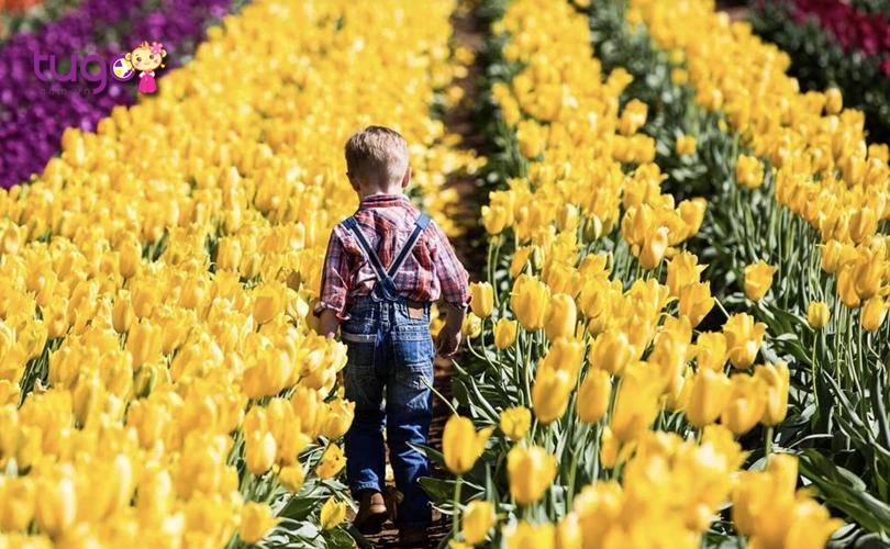 nhung-canh-hoa-tulip-ruc-ro-khoe-sac-trong-le-hoi-le-hoi-hoa-tesselaar