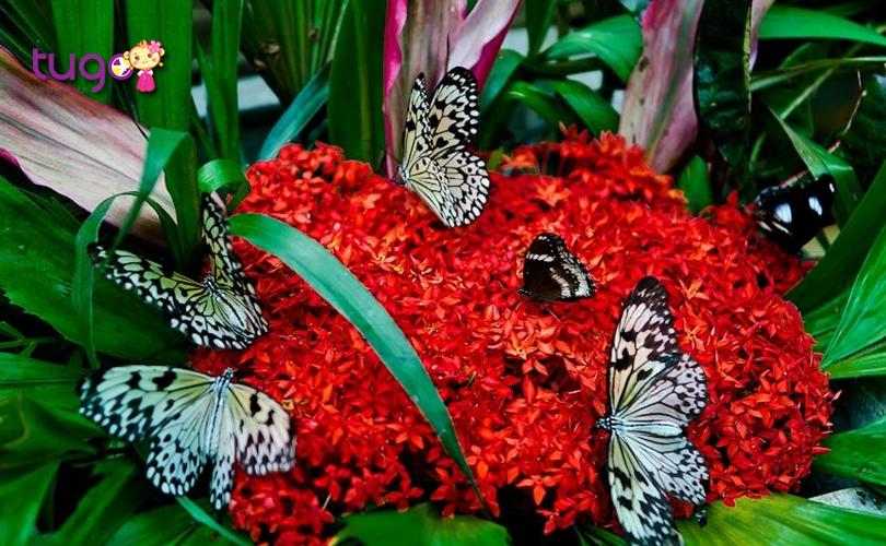 nhung-chu-buom-khoe-ve-dep-long-lay-o-butterfly-garden