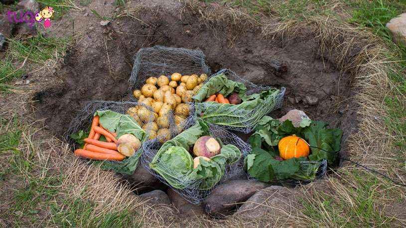 Những món ăn không thể bỏ qua ở New Zealand và Úc