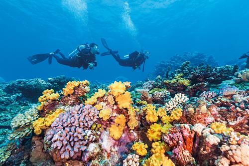 Porites là rạn san hô lâu đời nhất với 1.000 năm tuổi ở Great Barrier tugo.com.vn. Ảnh: Qantas.