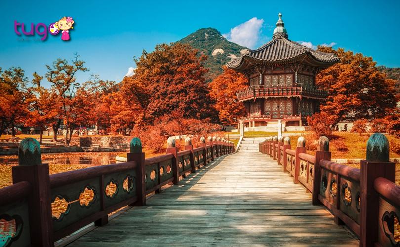 sac-do-mua-thu-vo-cung-an-tuong-tai-cung-dien-gyeongbokgung-lon-nhat-han-quoc