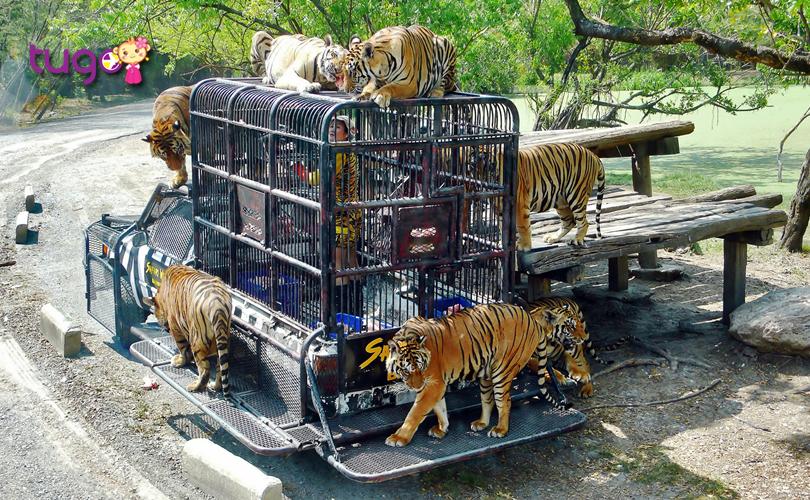 safari-world-la-vuon-thu-hoang-da-lon-nhat-bangkok-hien-nay