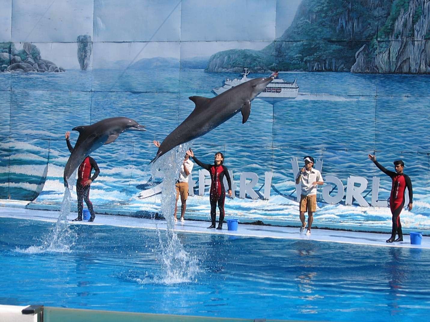 Biểu diễn cá heo tại Safari World