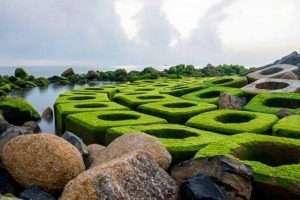 Đôi lúc, có một màn rêu xanh mướt phủ lên kè chắn sóng