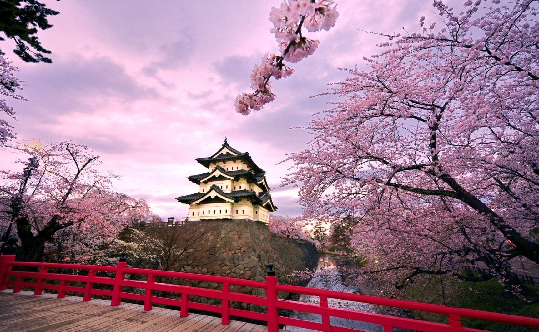 Nhật Bản là nơi nổi tiếng với những vườn hoa anh đào nở rộ rực rỡ