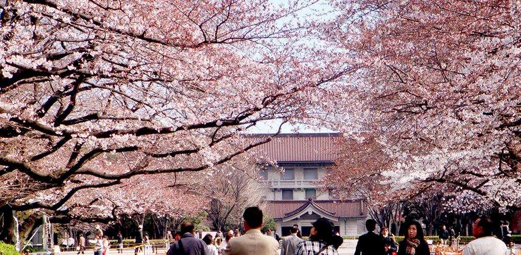 Công viên Ueno – nơi người dân Tokyo lặng người hòa cùng thiên nhiên