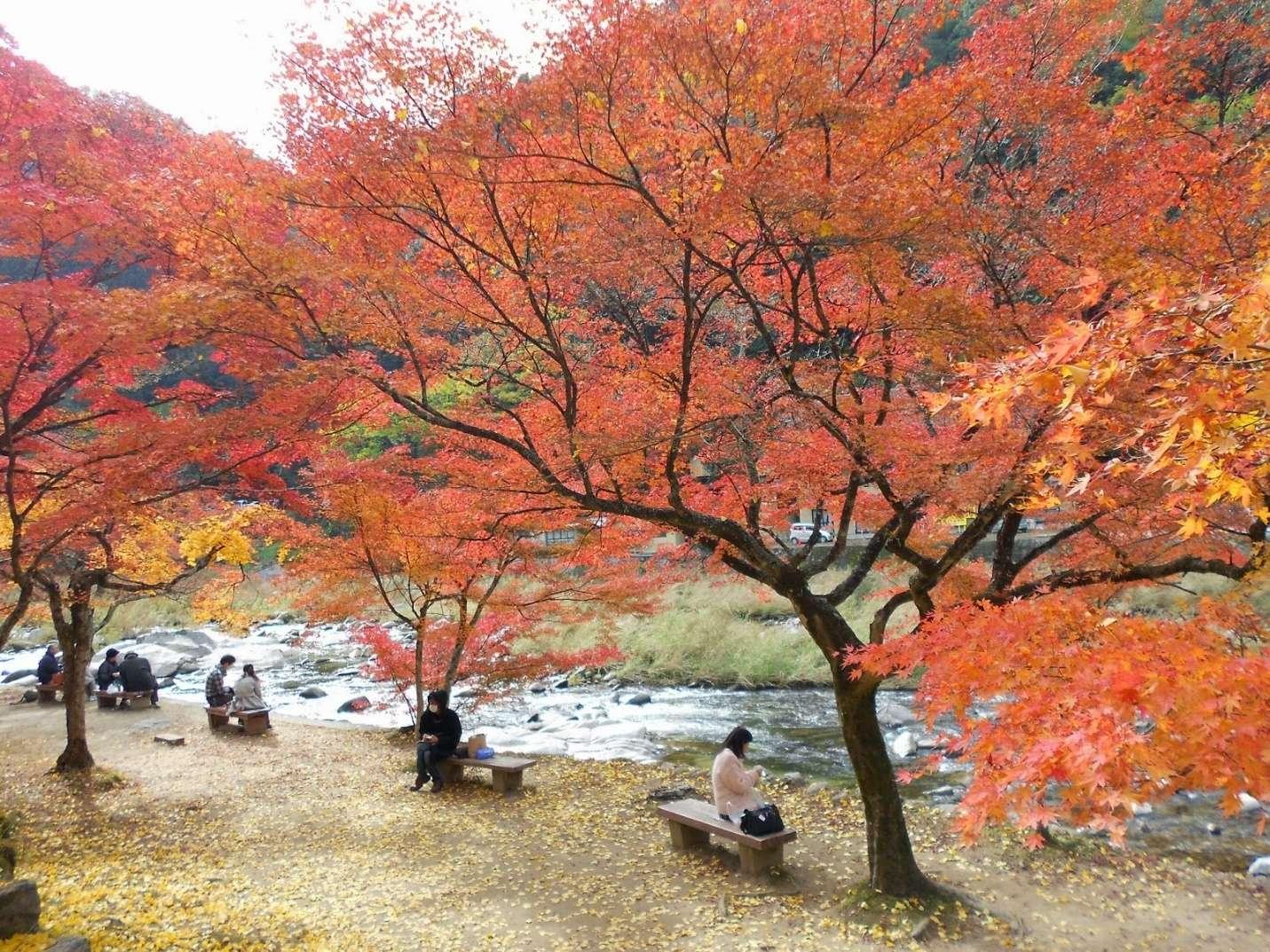 Nhật Bản nơi thu hút khá nhiều du khách trong và ngoài nước