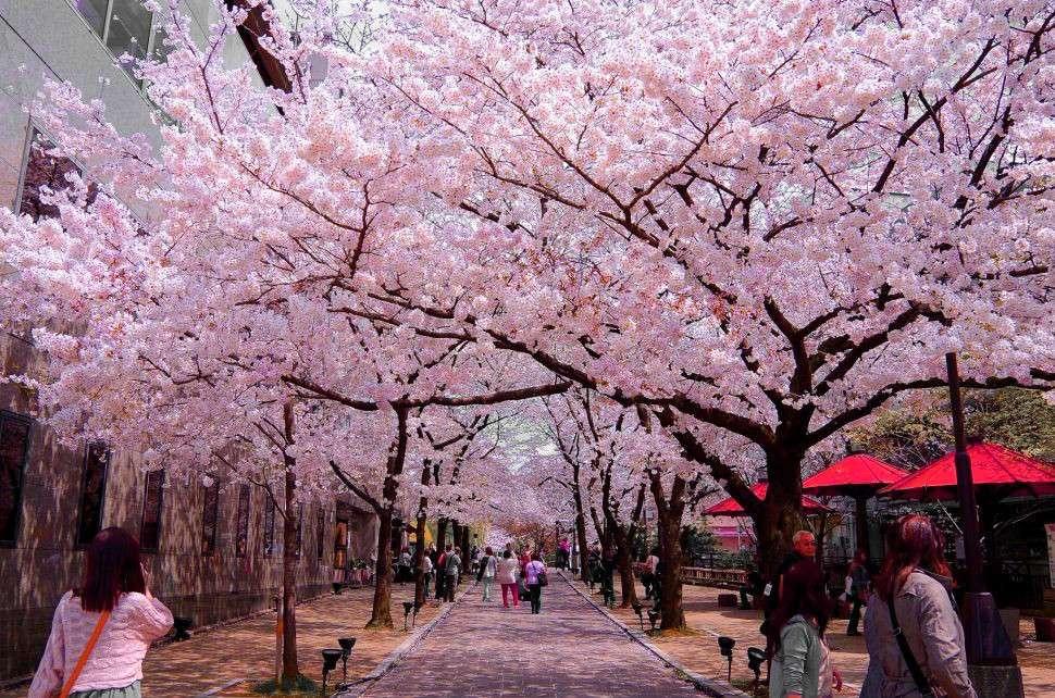 Công viên Inokashira – một gốc thơ mộng giữa lòng phố thị Tokyo