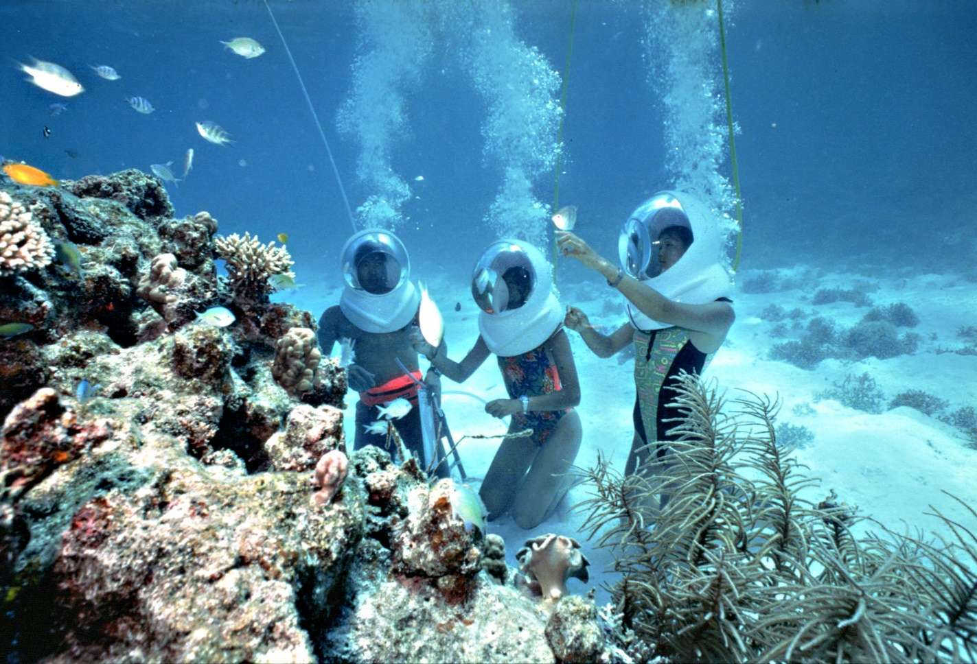 Bạn có thể tham gia chuơng trình lặn biển ngắm san hô ở đảo Coral
