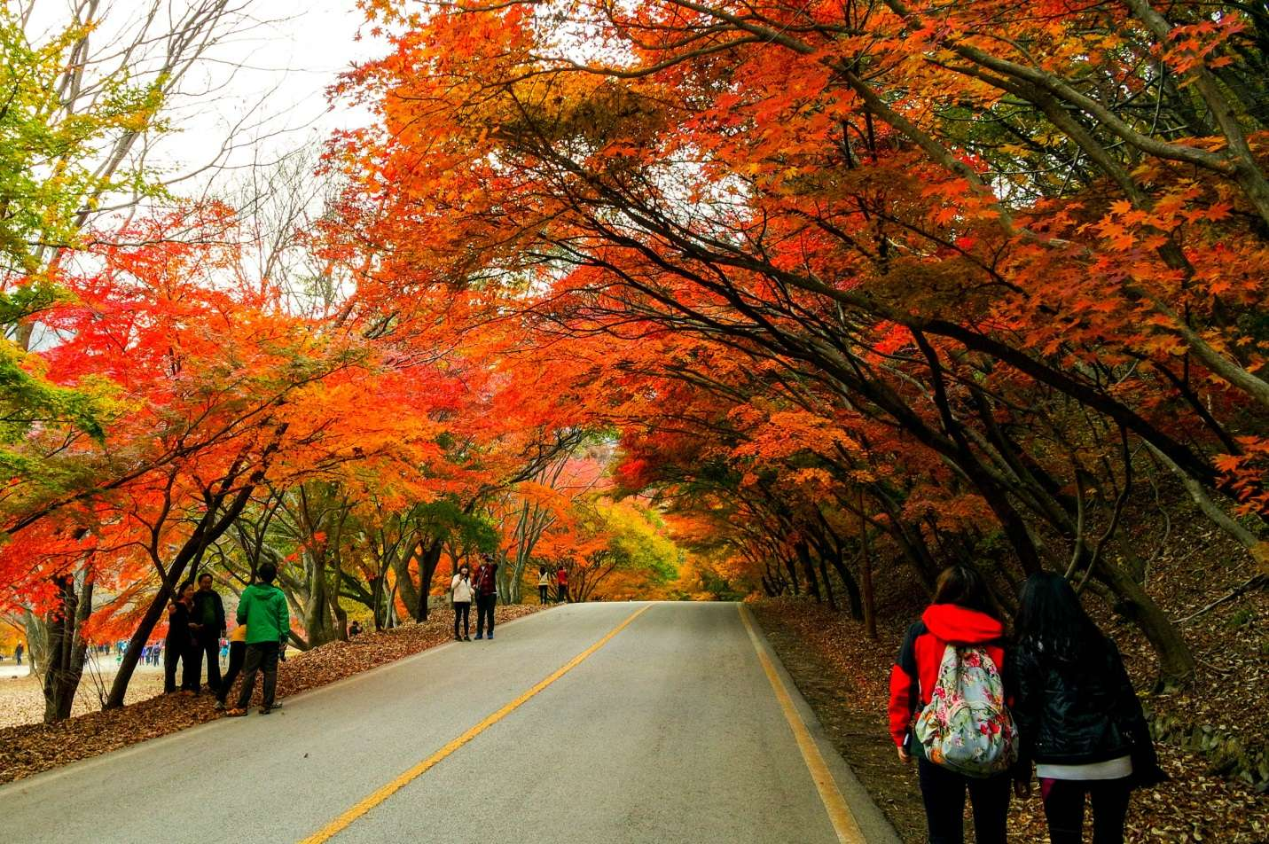 Mùa thu-thời điểm lí tưởng nhất trong năm để du lịch Hàn Quốc và trải nghiệm khung cảnh lá vàng rơi siêu lãng mạn
