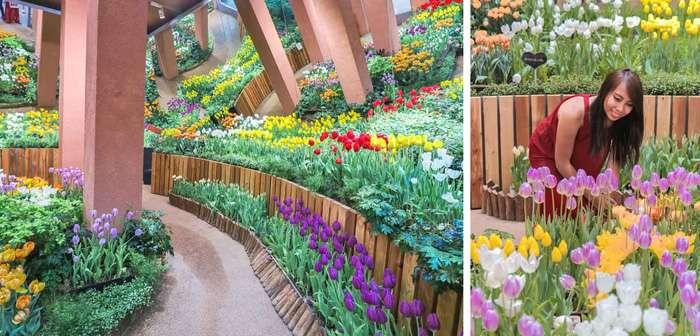 Phòng triển lãm hoa Tulip Tonami