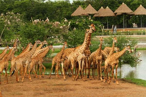 Vườn thú có nhiều loài động vật đặc trưng khắp nơi trên thế giới