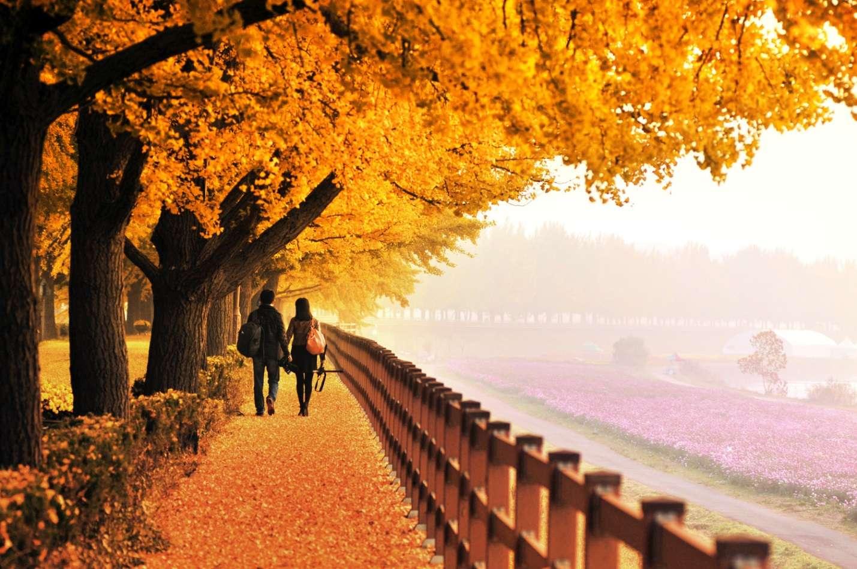 Mỗi mùa, Hàn Quốc đều ẩn chứa nét lãng mạn riêng không thể cưỡng lại