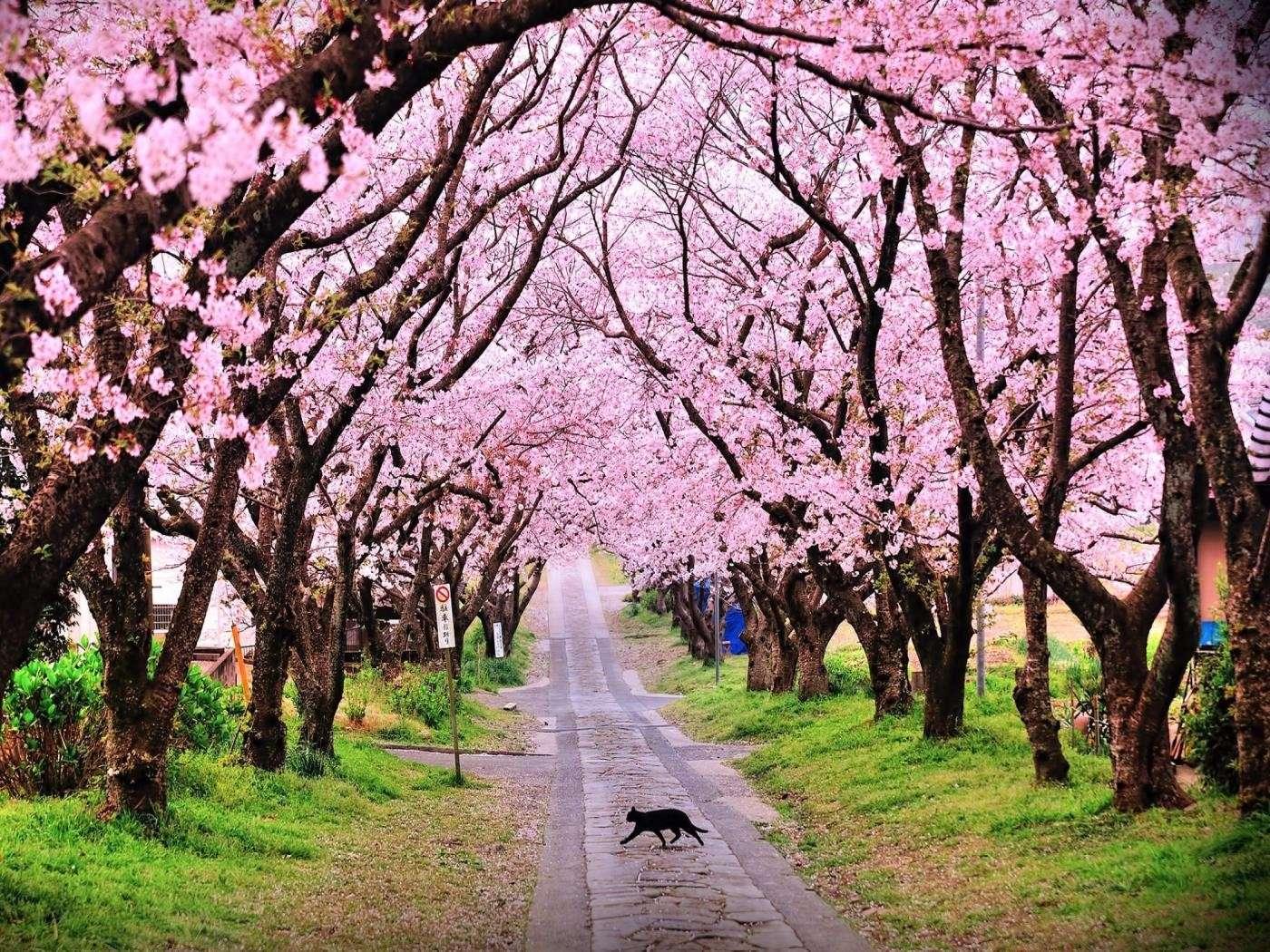 Núi Yoshino - Địa danh này vinh dự được UNESCO công nhận là Di sản thiên nhiên thế giới vào năm 2004