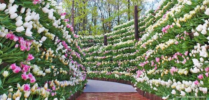 Thành phố Tonami còn có hội chợ hoa Tulip diễn ra hàng năm tại công viên
