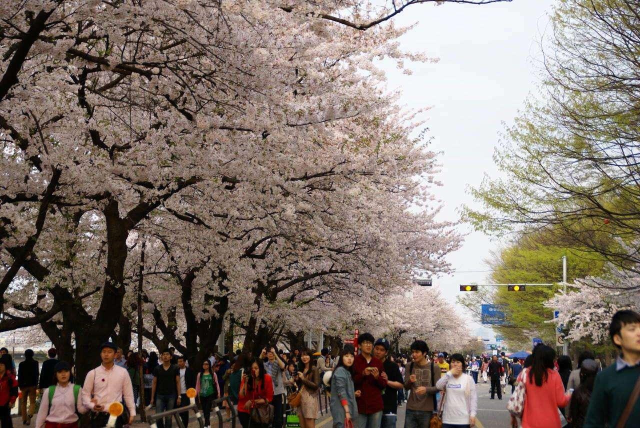 Hội hoa xuân Yeouido