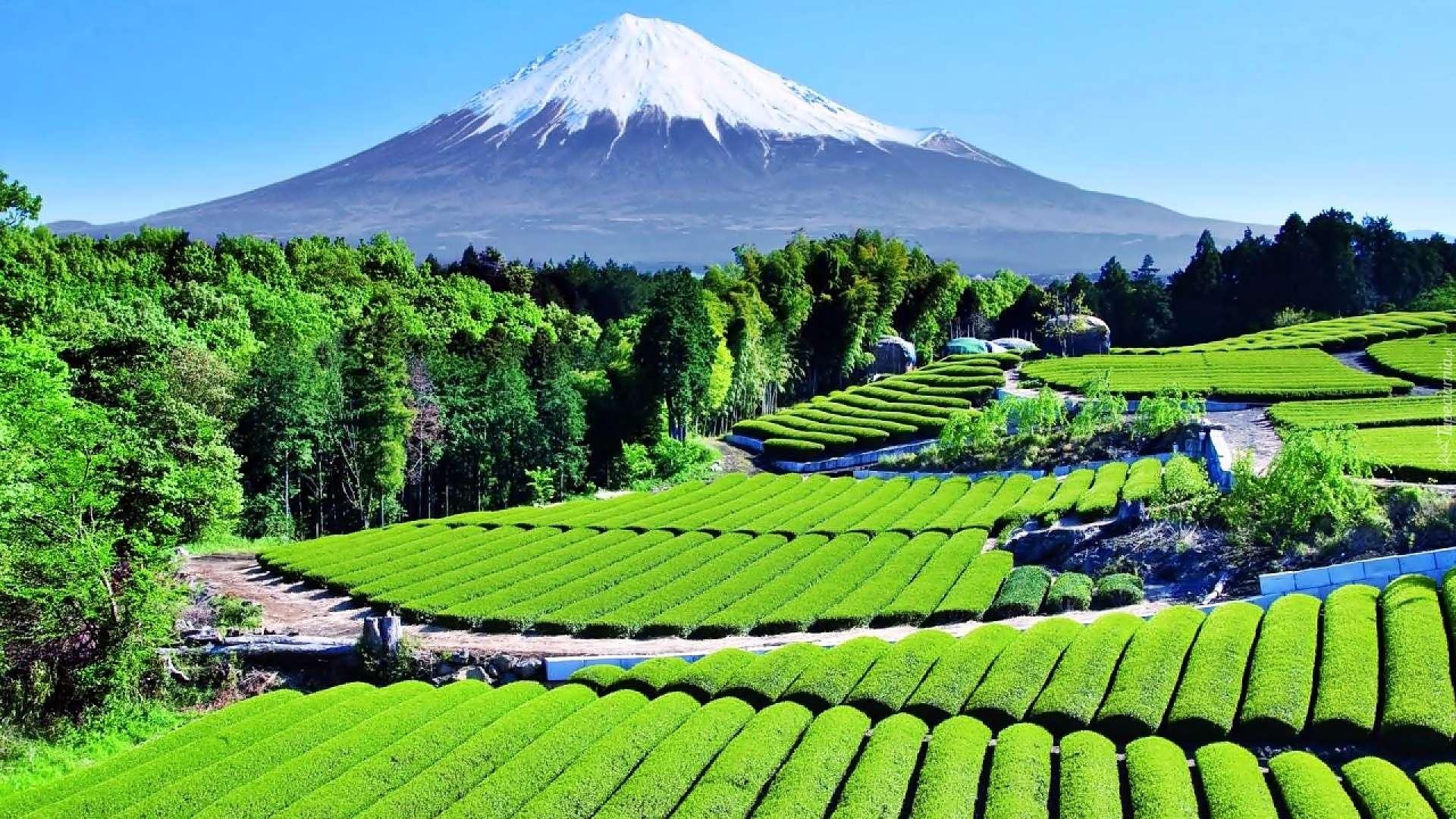 Tham quan Shizuoka – thị trấn yên bình của Nhật