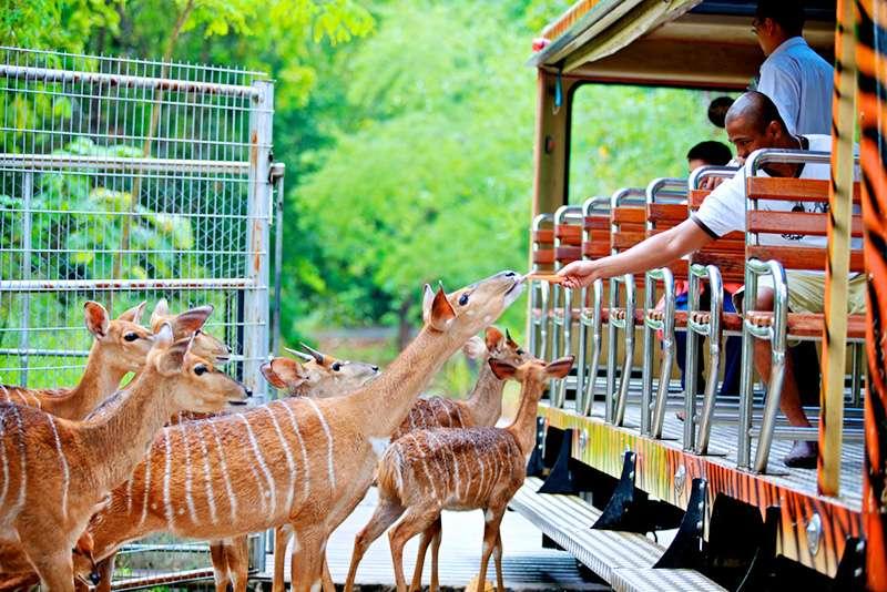 Hoạt động cho thú ăn ở Safari
