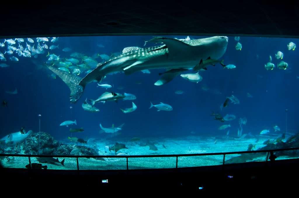 Bảo tàng sinh vật biển