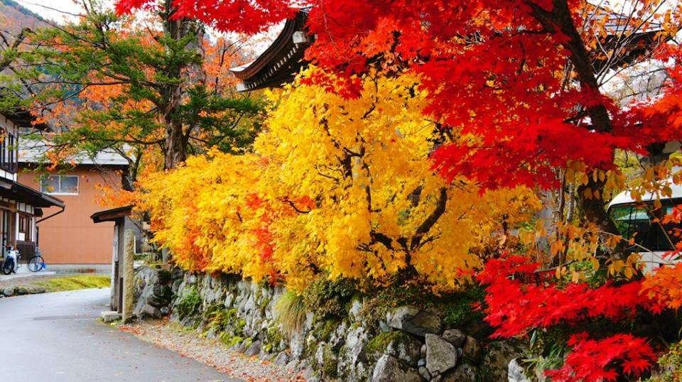 Lá vàng rực trải khắp các con đường