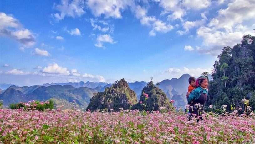 Trên cánh đồng hoa tam giác mạch, còn gì đẹp hơn những tà áo màu sắc của cô sơn nữ thấp thoáng như cánh bướm vờn trong gió