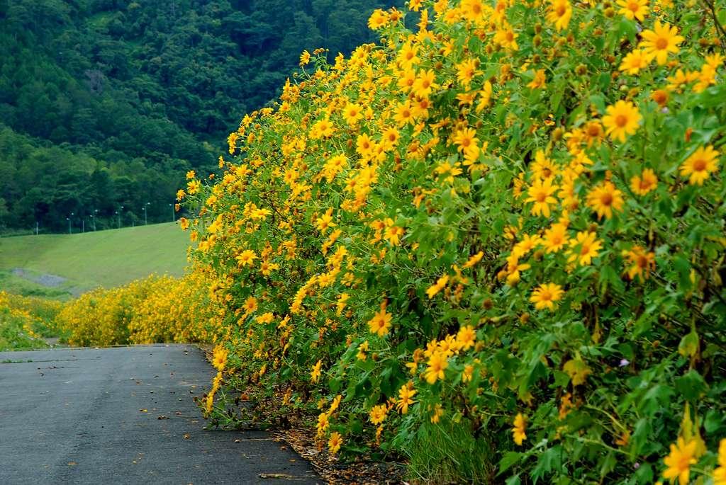 Cung đường ngắm hoa ở Đà Lạt vô cùng đẹp nhưng có phần nguy hiểm với nhũng ai chưa quen lái xe đường đèo dốc nhiều sương mù