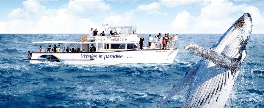 Mùa đông là khoảng thời gian ngắm cá voi trên tàu